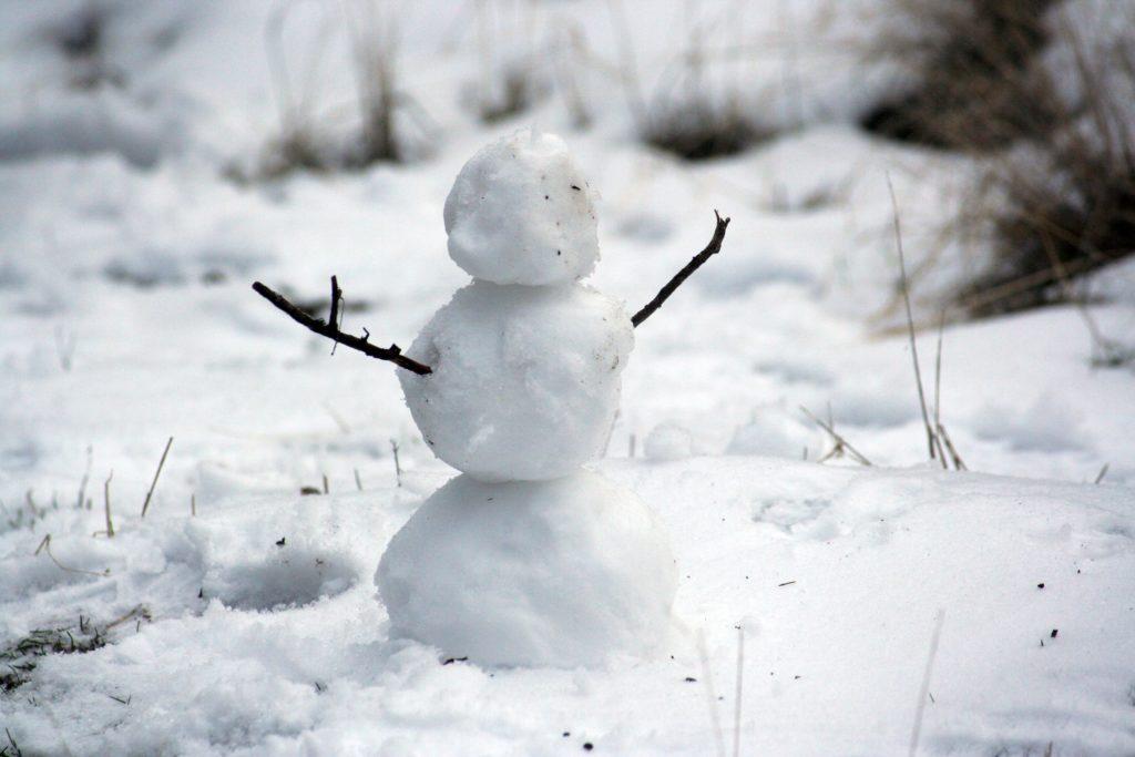 冬越しについて