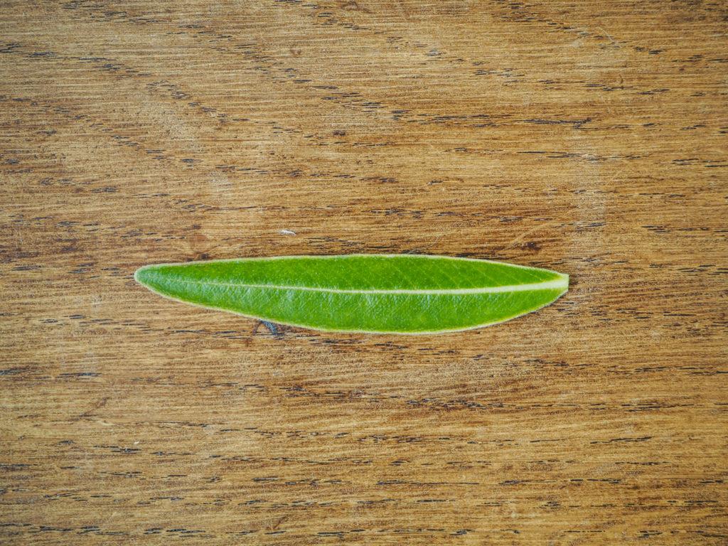 葉っぱの形