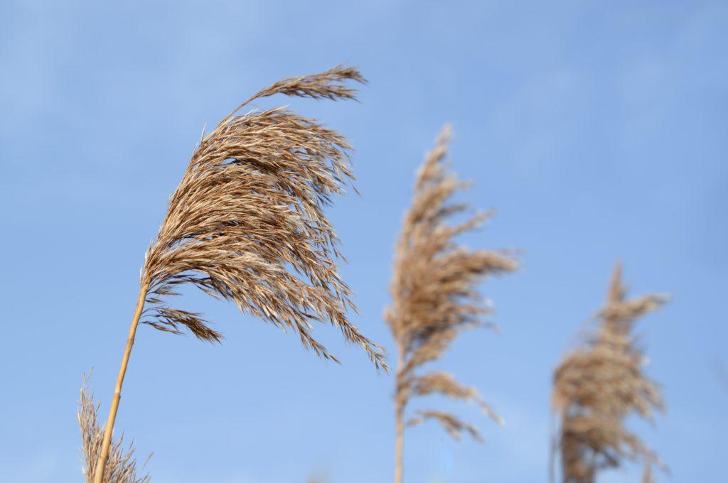 【徒長防止】植物に風通しが大切な5つの理由!