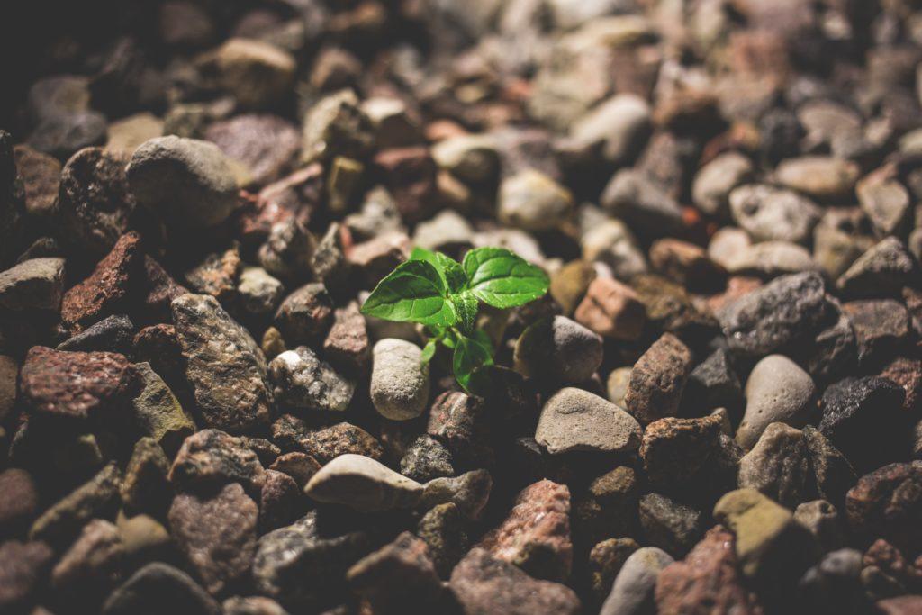 植物を育てることで得られる4つのメリット。