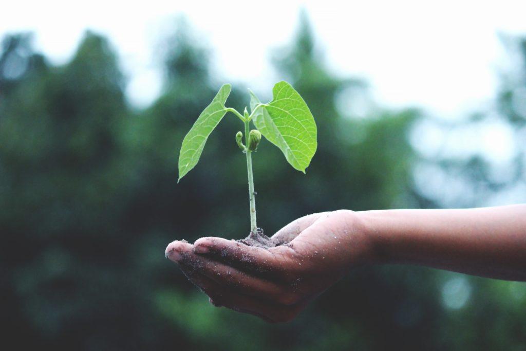 【初心者向け】パキポディウム、アガベの用土の配合例3選【多肉植物全般に使える】
