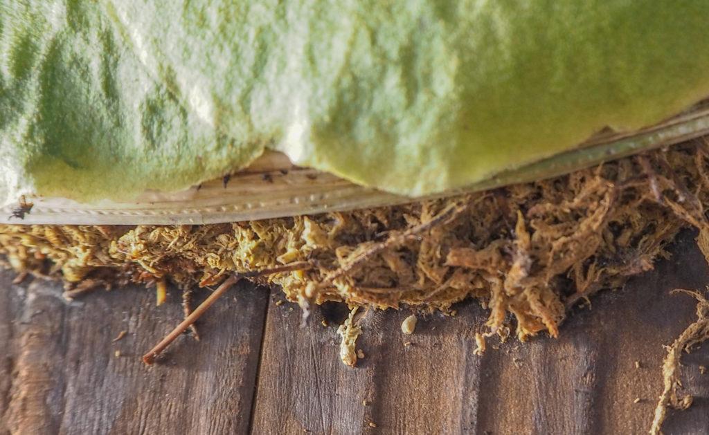水苔の乾燥状態を確認