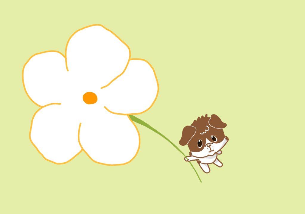花の色は白色です!