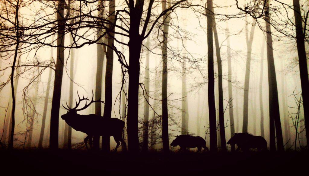結論から言うと、大型の動物からの食害を防ぐためだと言われています。