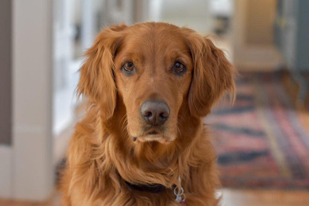 【後悔 !?】犬のしつけ教室に計22回通ってみた感想をまとめました!