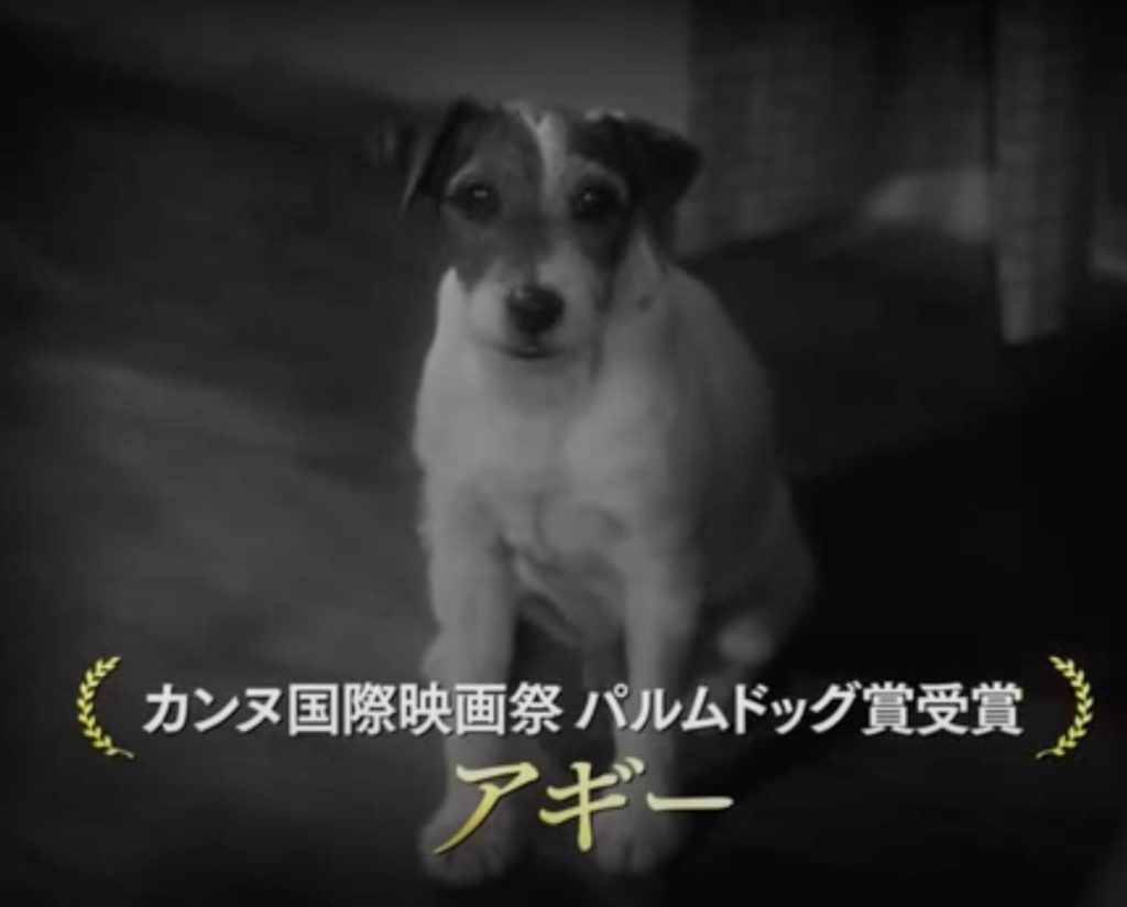 演じるのは俳優犬のアギー。