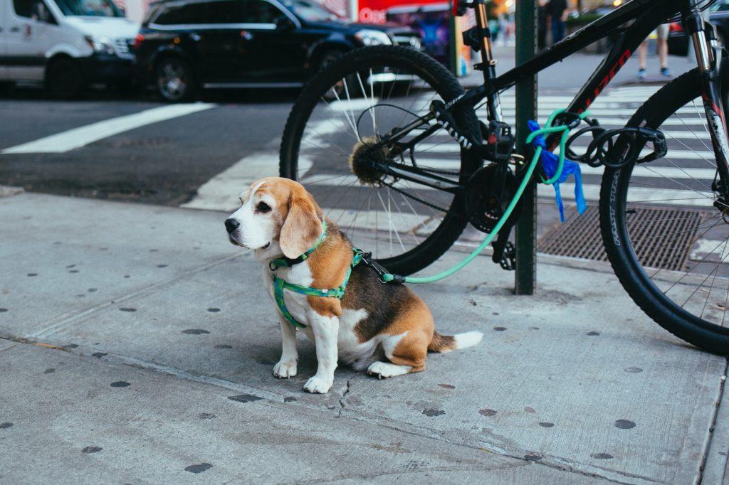 なぜ犬ってこんなにもかわいいのか自分なりに考察してみた。
