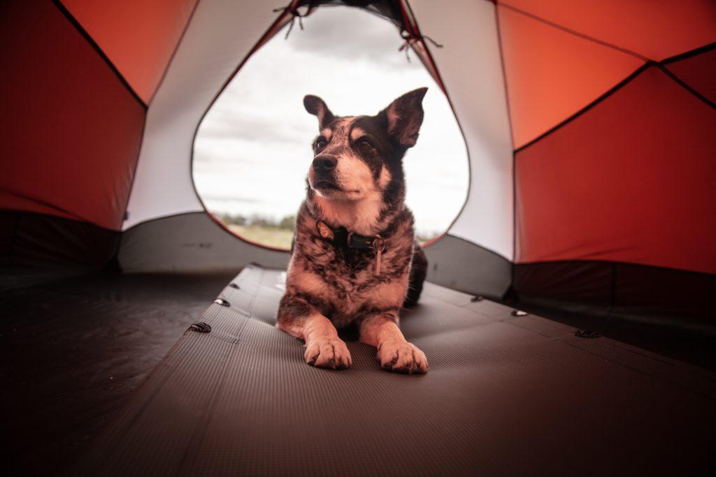 犬と一緒にキャンプ!楽しみ方や持ち物を解説。無駄吠えは事前にしつけを!