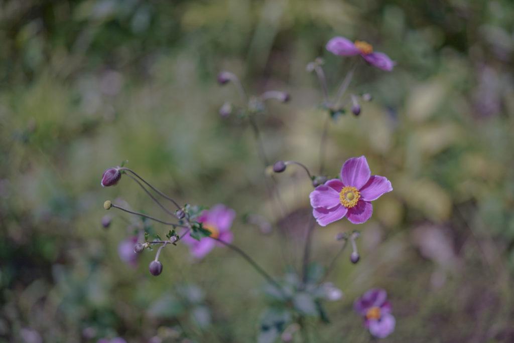 可愛いお花もいっぱいありまっせ〜