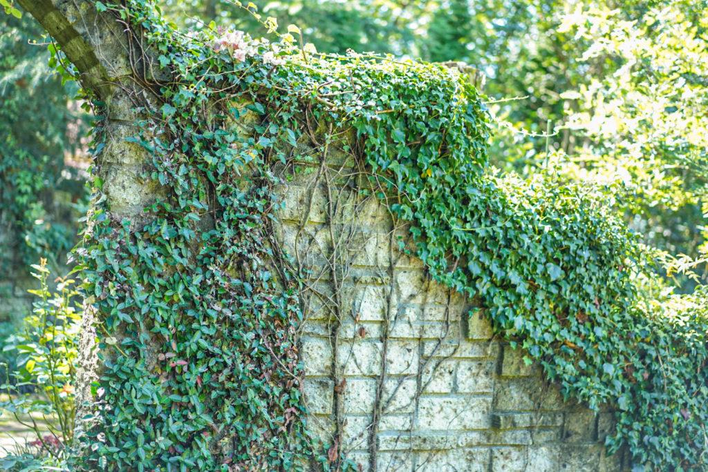 神秘的な壁。ゼルダ壁。