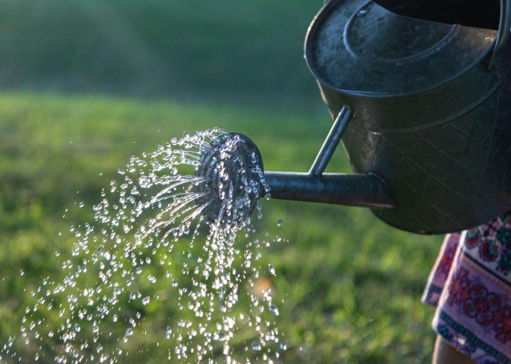 【育て方】基本的に毎日水やり