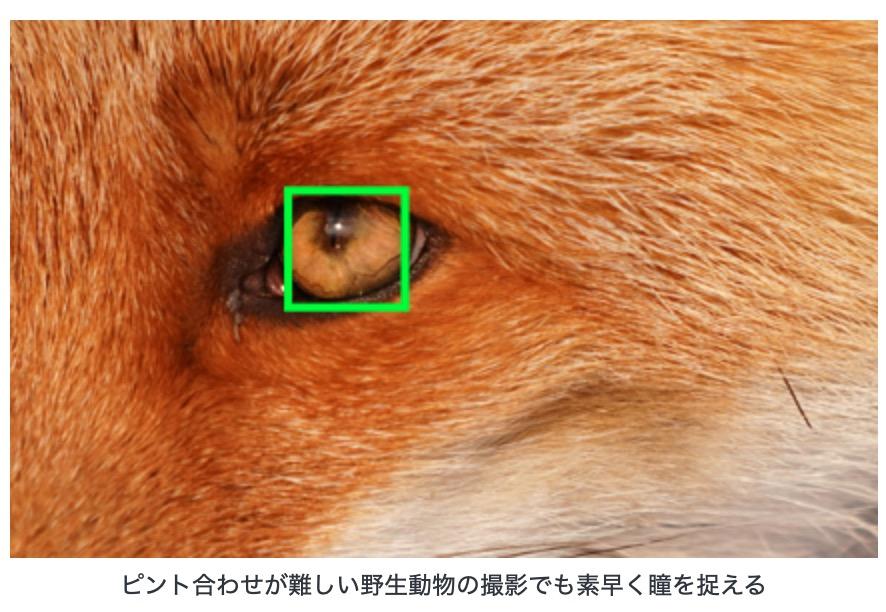動物の瞳までしっかりとAFしてくれてマジ助かる