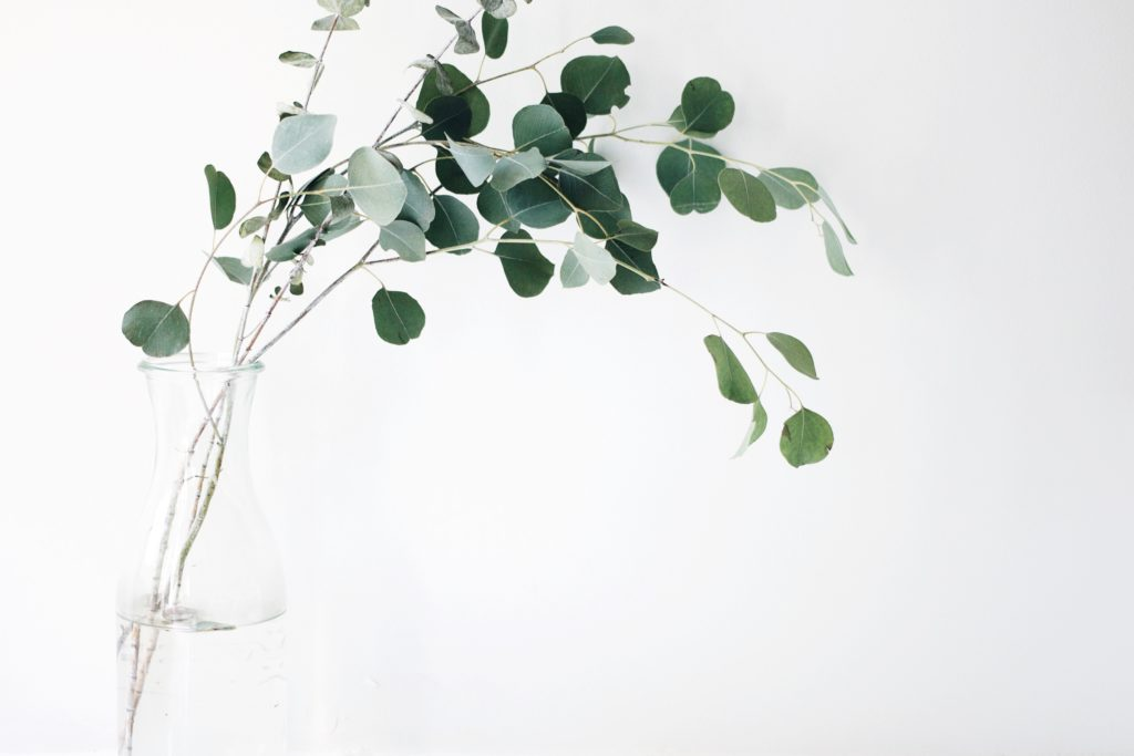 部屋に飾ろう観葉植物