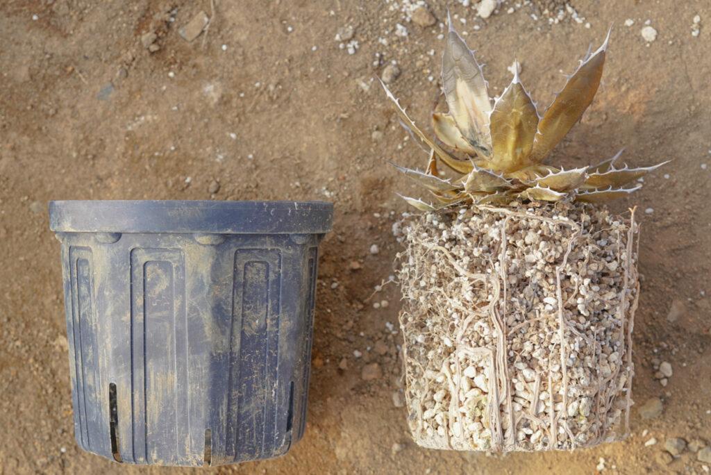 スリット鉢の原理を簡単に解説